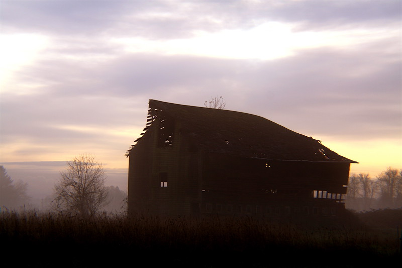 rural decay in the morning fog