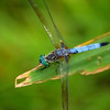 DragonFly_20090818_0297