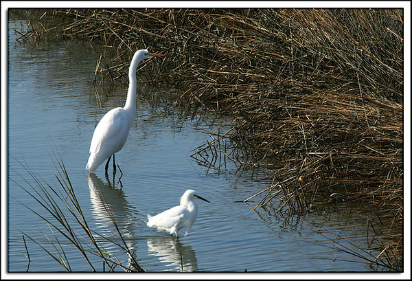 Two Different Kinds of Egret