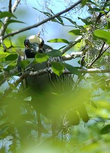 Heron in Honduras from a Kayak