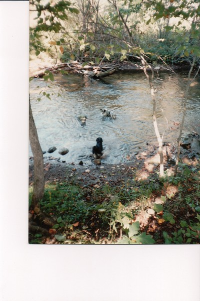 SCAN0343