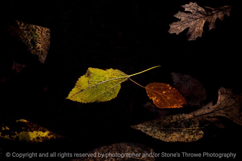 015-leaves_floating-wdsm-02nov14-09x06-009-350-0500
