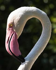 Dennis Stewart - Flamingo
