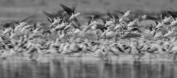 Flock.... in flight