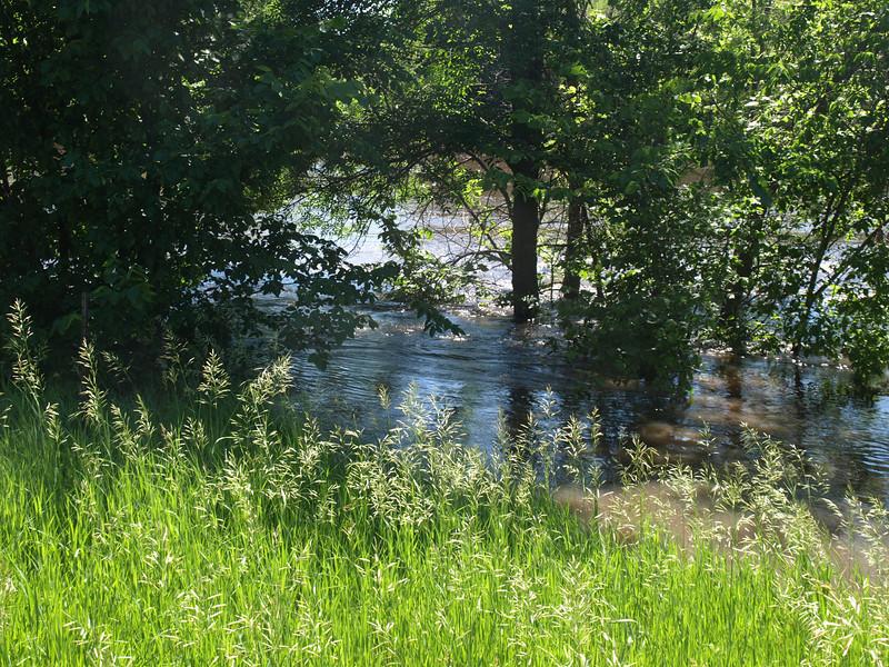 Crow River near Mayer, June 21, 2014.
