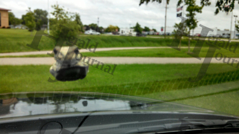 A frog jumped on the sheriff's windshield.