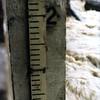 Gauge Measuring the Flood Waters (00673)