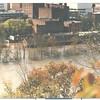 Fall Leaves  (00630)