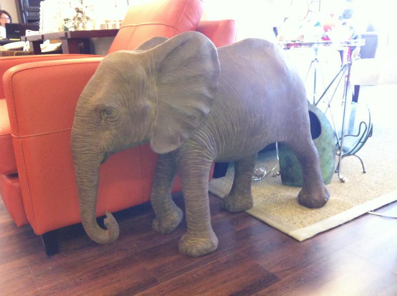 Olivia the elephant