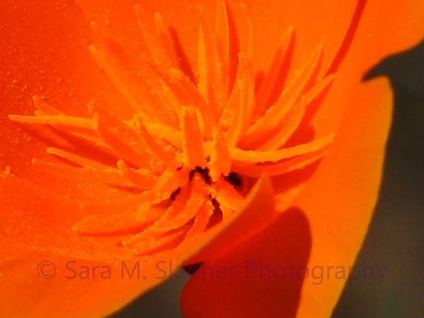 Poppy Day (1)