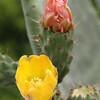 Sherbert Floras