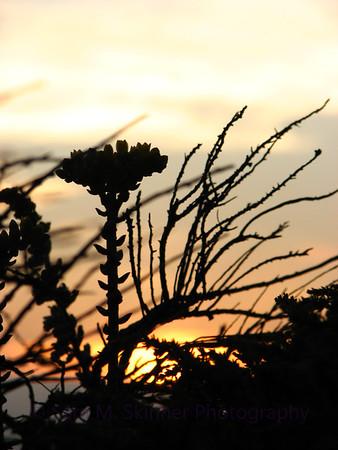 Sunset Snag
