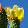 Flowering Furlough