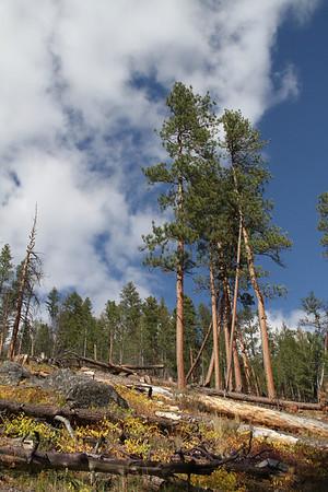 Montana Daydreams III