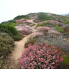 Trail Bonanza