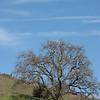 Oak Stand Off