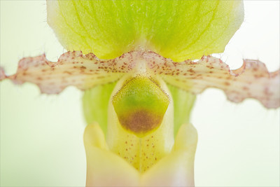 Orchid bloom close-up