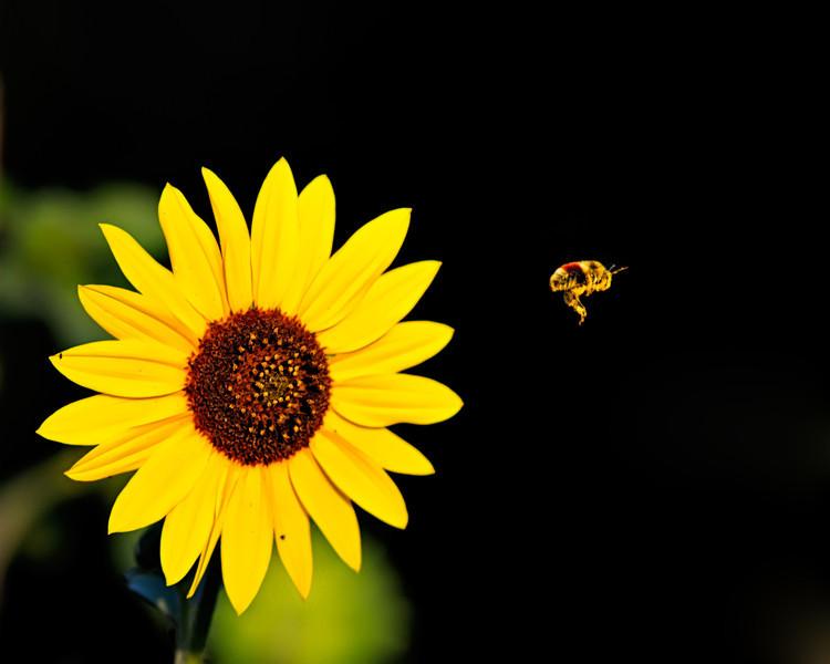 BeeParture