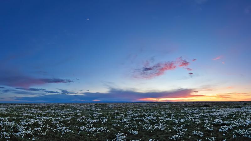 Pawnee Primrose Panorama