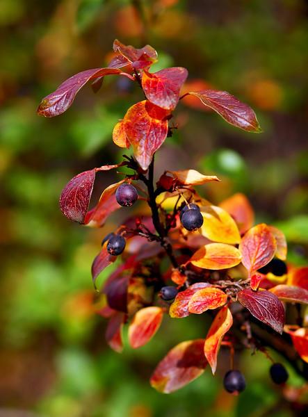 An Autumn Bokeh