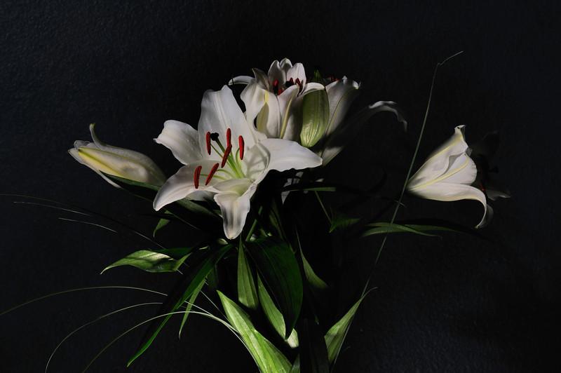liliesfortracey_nopsfinal