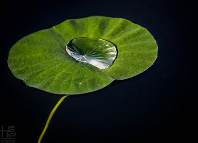 Big water drop on lily pad