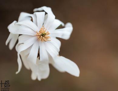 Full-bloom tree flower