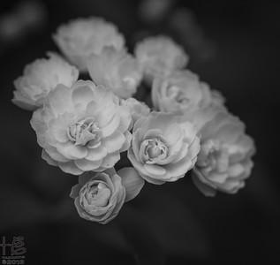Floating mini-flower cluster