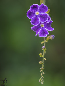 Dainty purple flowers