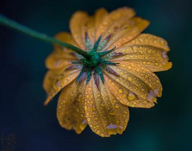 Flower backside