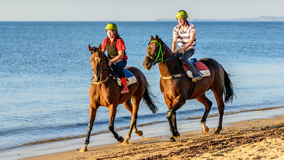 Horses - Balnarring Beach
