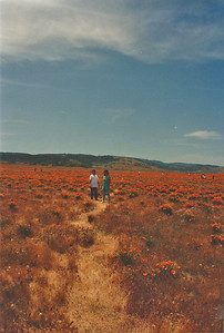 April 1992. Antelope Valley Poppy Reserve, Antelope Valley, N. Los Angeles County, CA