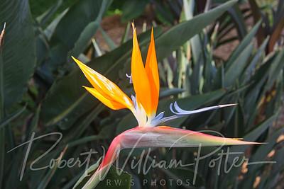 7228-Bird of Paradise