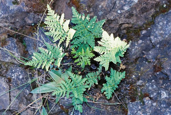 4/3/05 Fern (unidentified). Grotto Trail, Circle X Ranch. Santa Monica Mountains National Recreation Area, Ventura County, CA