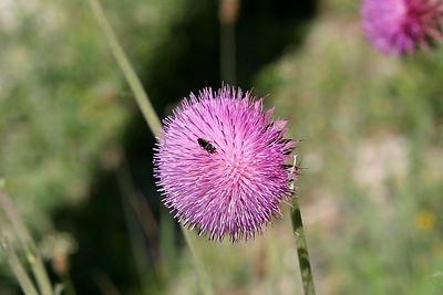 flower 0243