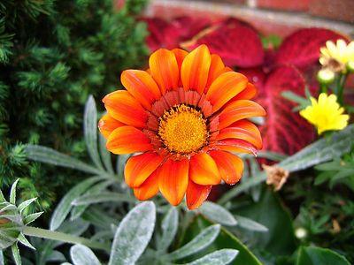 vividflower