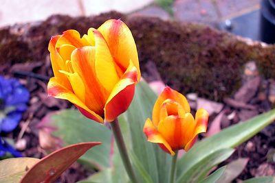 flower dscn3526