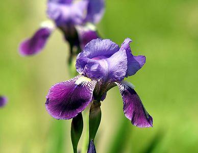 flower 7126