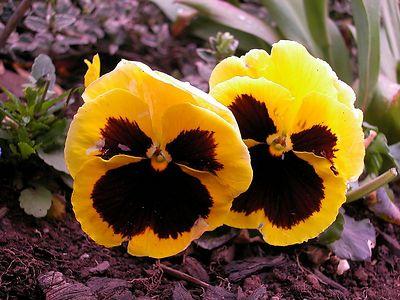 flower dscn3524