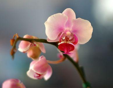 flower 7397