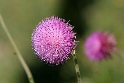 flower 0241