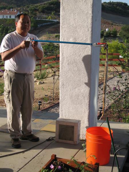 6/11/08 Red Diamond Rattesnake (Crotalus ruber). Kyle Court, La Cresta, Murrieta, SW Riverside County, CA