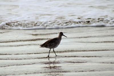 1/17/05 ? Morro Strand State Beach, San Luis Obispo County, CA