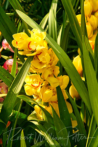 1492-Yellow Orchid