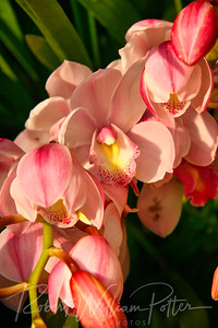 1493-Pink Orchid