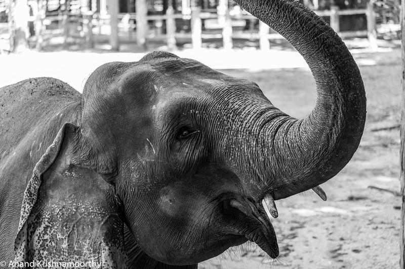 Pinnewala, Sri Lanka