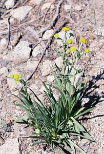 7/1/05 Unidentified. South Fork Bishop Creek (before South Lake)