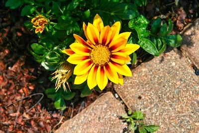 6421-Flower