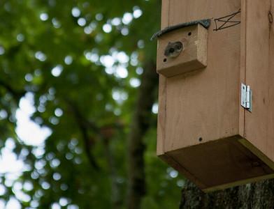 flying squirrel in squirrel condo
