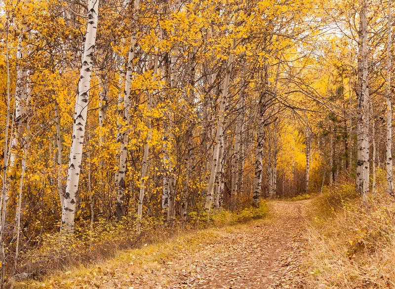 Aspen Trail